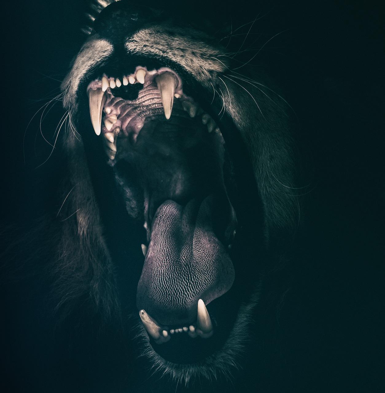 Les dents de sagesse, quand les faire enlever?